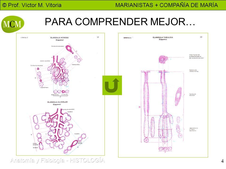 © Prof. Víctor M. Vitoria MARIANISTAS + COMPAÑÍA DE MARÍA 5 DIAPOSITIVA 2