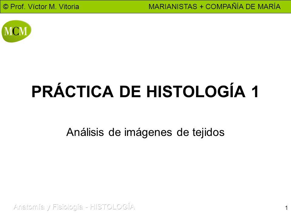 © Prof. Víctor M. Vitoria MARIANISTAS + COMPAÑÍA DE MARÍA 1 PRÁCTICA DE HISTOLOGÍA 1 Análisis de imágenes de tejidos