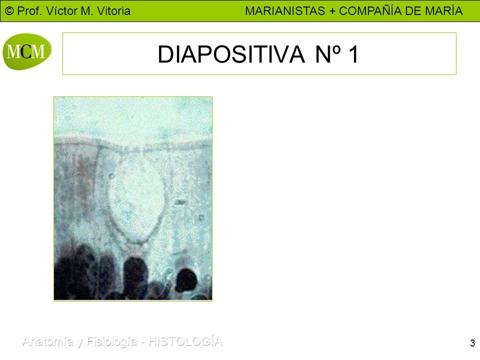 © Prof. Víctor M. Vitoria MARIANISTAS + COMPAÑÍA DE MARÍA 3 DIAPOSITIVA Nº 1