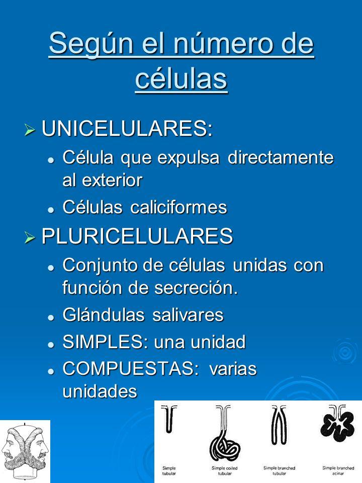 I A N V S Según el número de células UNICELULARES: UNICELULARES: Célula que expulsa directamente al exterior Célula que expulsa directamente al exteri