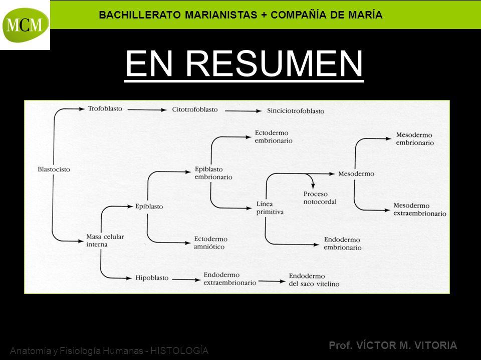 BACHILLERATO MARIANISTAS + COMPAÑÍA DE MARÍA Prof. VÍCTOR M. VITORIA Anatomía y Fisiología Humanas - HISTOLOGÍA EN RESUMEN