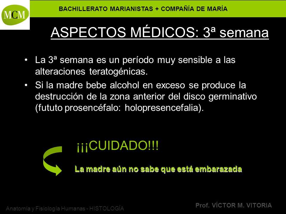 BACHILLERATO MARIANISTAS + COMPAÑÍA DE MARÍA Prof. VÍCTOR M. VITORIA Anatomía y Fisiología Humanas - HISTOLOGÍA ASPECTOS MÉDICOS: 3ª semana La 3ª sema
