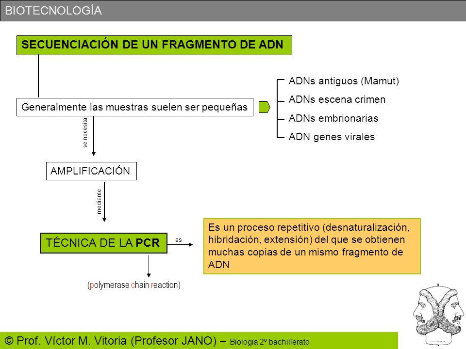 BIOTECNOLOGÍA © Prof. Víctor M. Vitoria (Profesor JANO) – Biología 2º bachillerato SECUENCIACIÓN DE UN FRAGMENTO DE ADN Generalmente las muestras suel