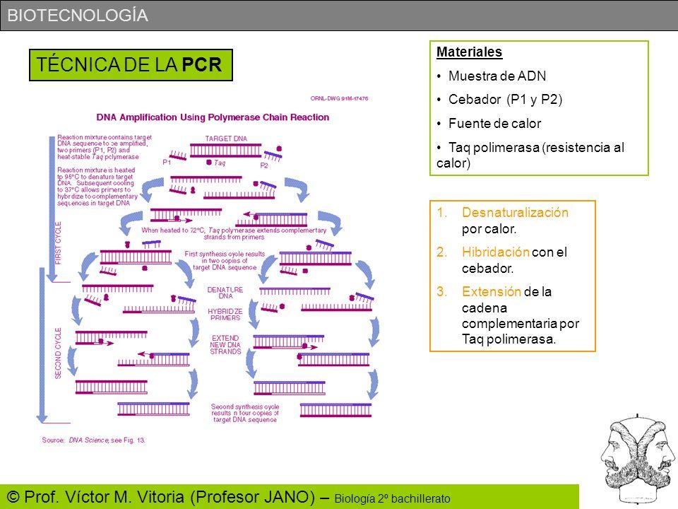BIOTECNOLOGÍA © Prof. Víctor M. Vitoria (Profesor JANO) – Biología 2º bachillerato TÉCNICA DE LA PCR Materiales Muestra de ADN Cebador (P1 y P2) Fuent