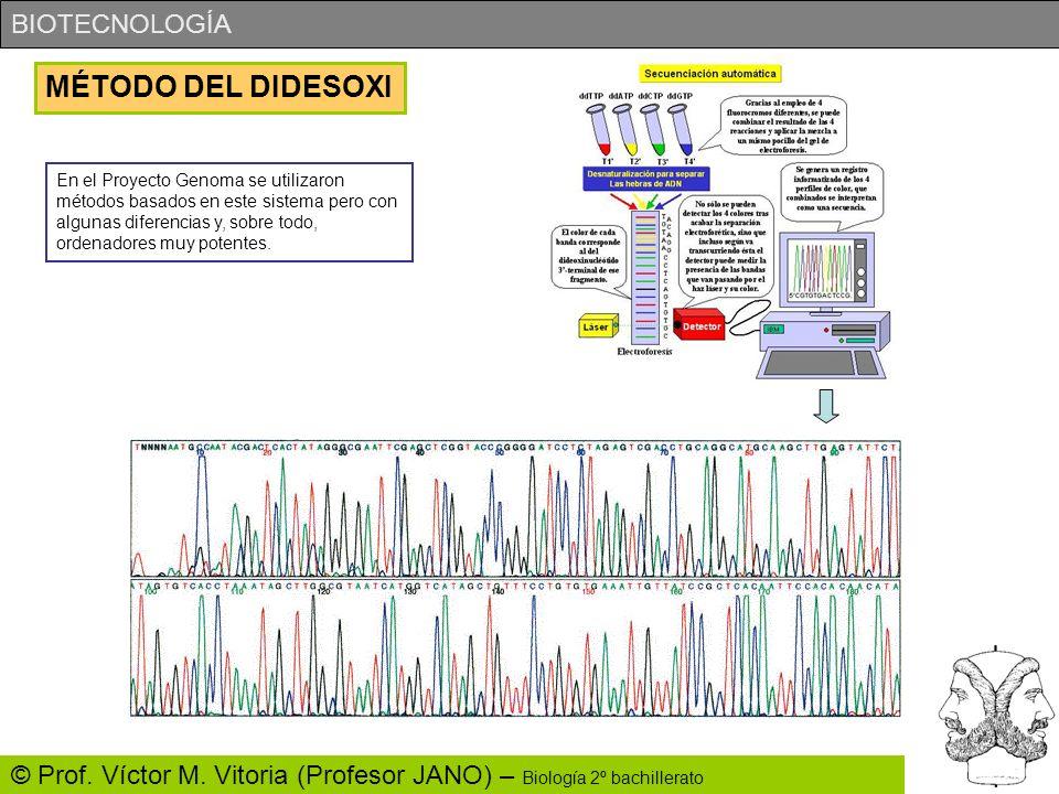 BIOTECNOLOGÍA © Prof. Víctor M. Vitoria (Profesor JANO) – Biología 2º bachillerato MÉTODO DEL DIDESOXI En el Proyecto Genoma se utilizaron métodos bas