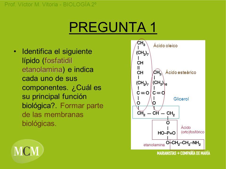 Prof. Víctor M. Vitoria - BIOLOGÍA 2º PREGUNTA 1 fosfatidil etanolaminaIdentifica el siguiente lípido (fosfatidil etanolamina) e indica cada uno de su