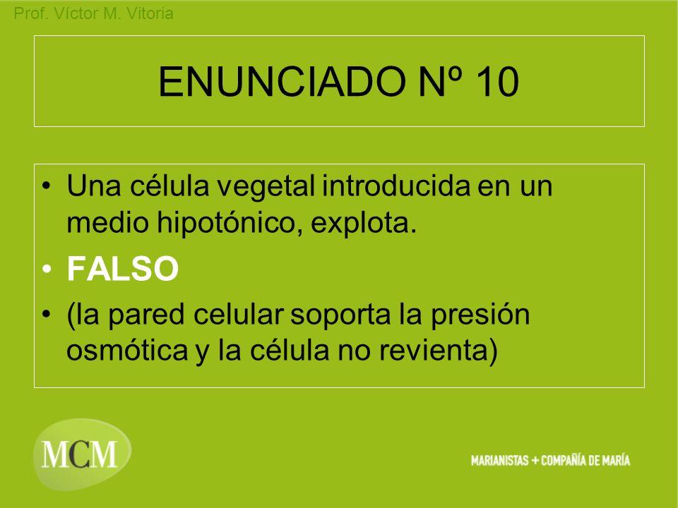 Prof. Víctor M. Vitoria ENUNCIADO Nº 10 Una célula vegetal introducida en un medio hipotónico, explota. FALSO (la pared celular soporta la presión osm