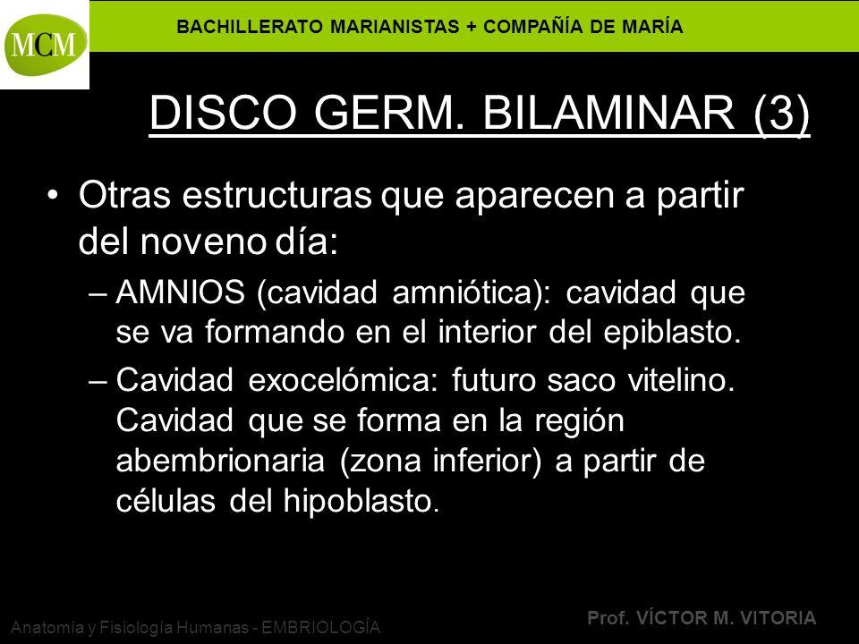 BACHILLERATO MARIANISTAS + COMPAÑÍA DE MARÍA Prof. VÍCTOR M. VITORIA Anatomía y Fisiología Humanas - EMBRIOLOGÍA DISCO GERM. BILAMINAR (3) Otras estru
