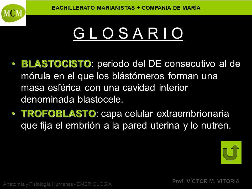 BACHILLERATO MARIANISTAS + COMPAÑÍA DE MARÍA Prof. VÍCTOR M. VITORIA Anatomía y Fisiología Humanas - EMBRIOLOGÍA G L O S A R I O BLASTOCISTOBLASTOCIST