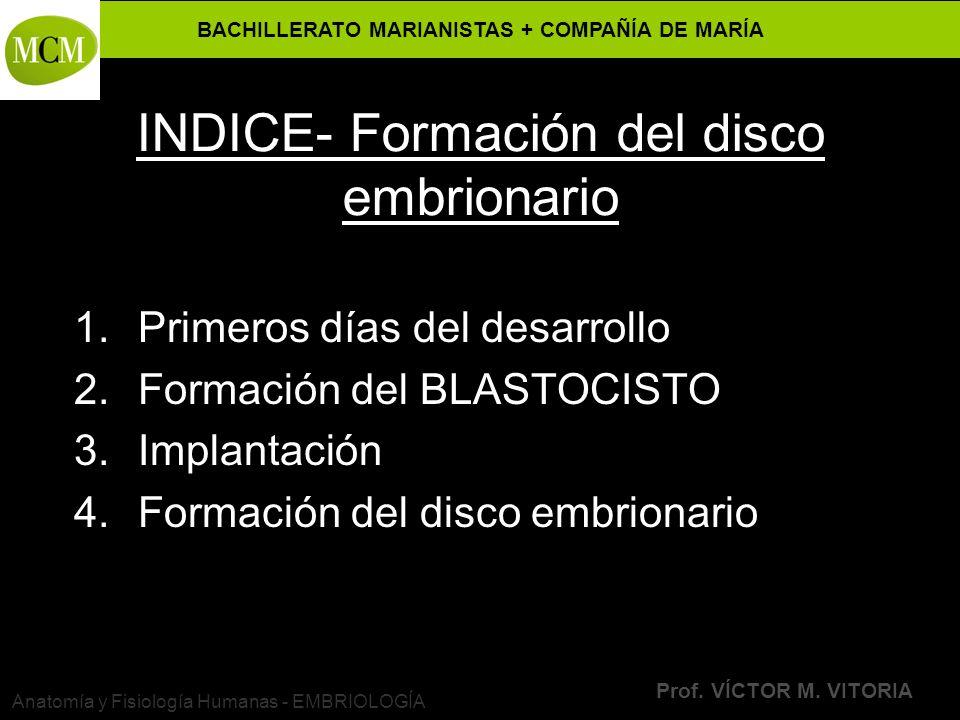BACHILLERATO MARIANISTAS + COMPAÑÍA DE MARÍA Prof. VÍCTOR M. VITORIA Anatomía y Fisiología Humanas - EMBRIOLOGÍA INDICE- Formación del disco embrionar