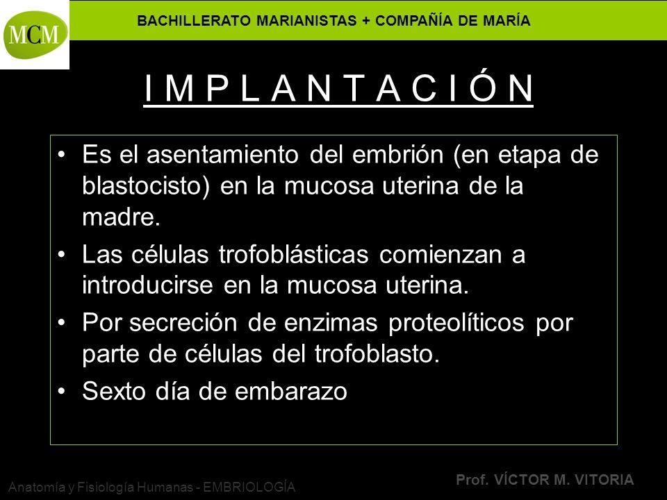 BACHILLERATO MARIANISTAS + COMPAÑÍA DE MARÍA Prof. VÍCTOR M. VITORIA Anatomía y Fisiología Humanas - EMBRIOLOGÍA I M P L A N T A C I Ó N Es el asentam