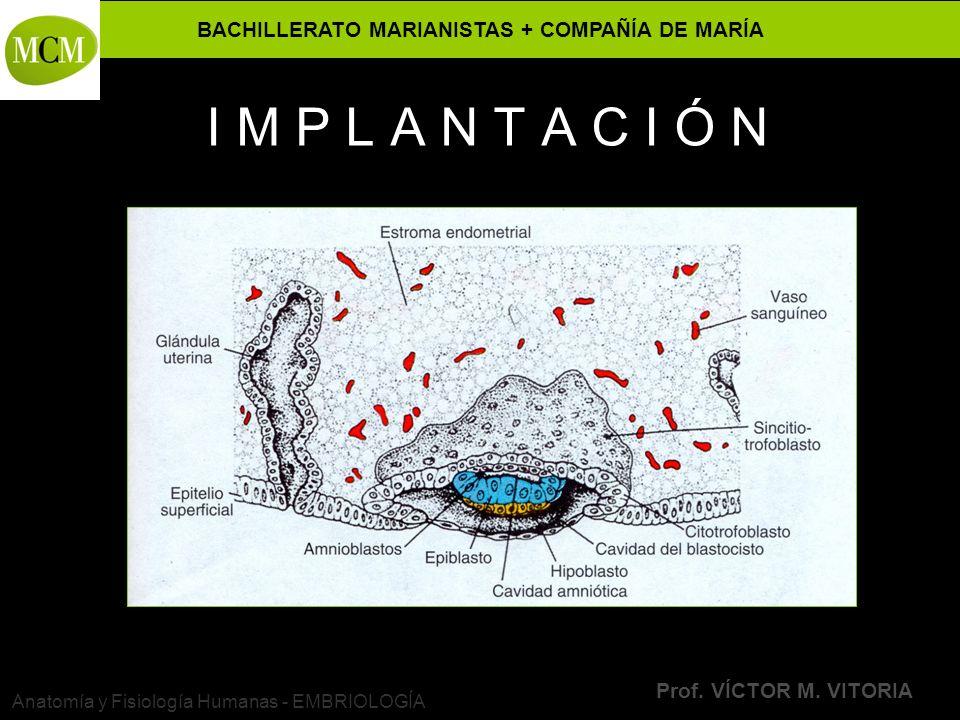 BACHILLERATO MARIANISTAS + COMPAÑÍA DE MARÍA Prof. VÍCTOR M. VITORIA Anatomía y Fisiología Humanas - EMBRIOLOGÍA I M P L A N T A C I Ó N