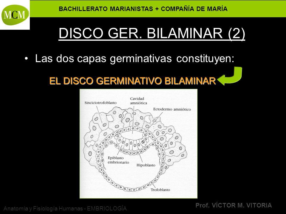 BACHILLERATO MARIANISTAS + COMPAÑÍA DE MARÍA Prof. VÍCTOR M. VITORIA Anatomía y Fisiología Humanas - EMBRIOLOGÍA DISCO GER. BILAMINAR (2) Las dos capa