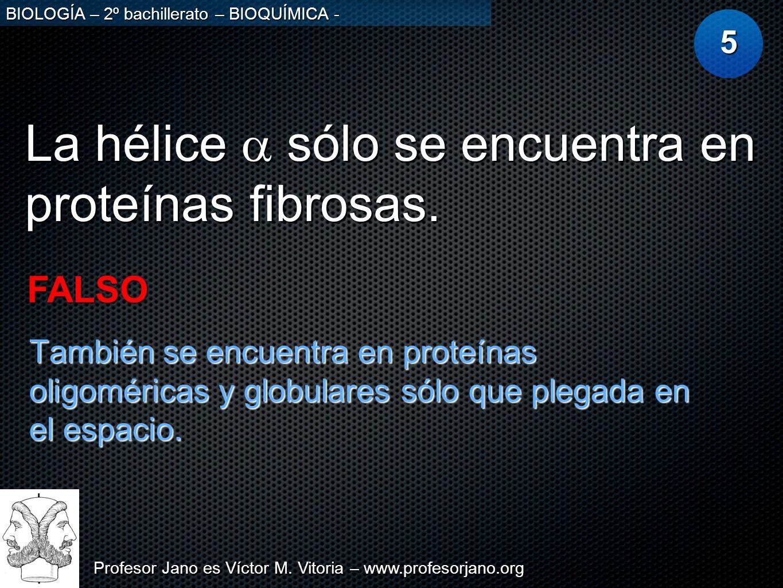 Profesor Jano es Víctor M. Vitoria – www.profesorjano.org BIOLOGÍA – 2º bachillerato – BIOQUÍMICA - La hélice sólo se encuentra en proteínas fibrosas.