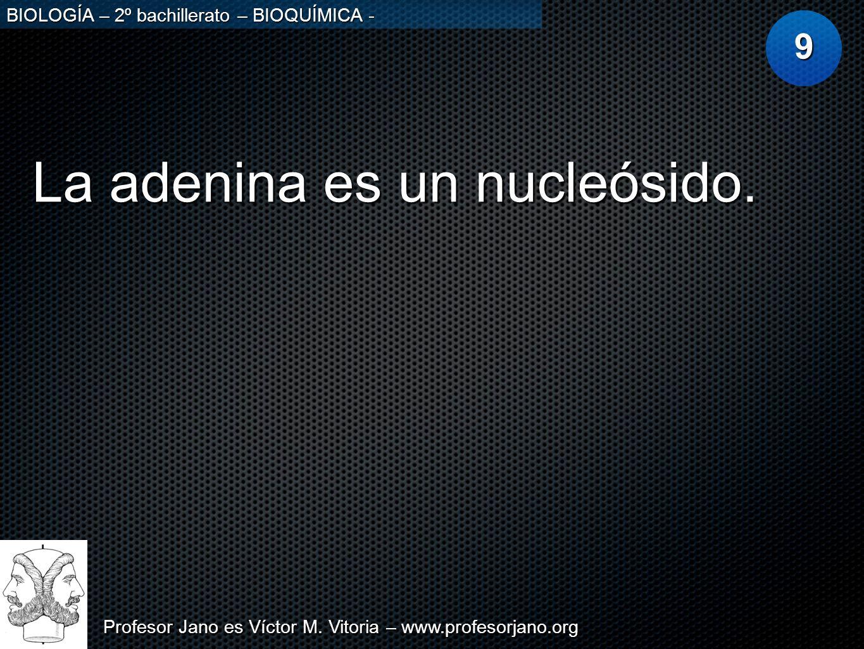 Profesor Jano es Víctor M. Vitoria – www.profesorjano.org BIOLOGÍA – 2º bachillerato – BIOQUÍMICA - La adenina es un nucleósido. 9