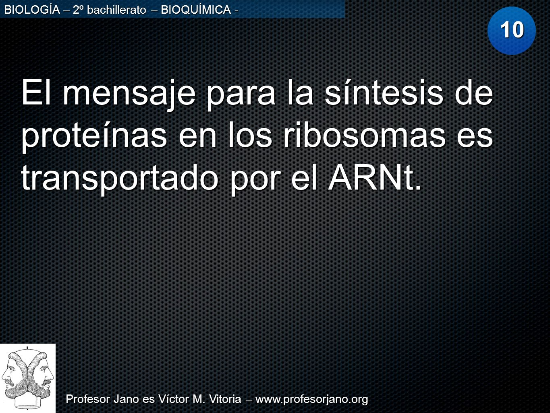Profesor Jano es Víctor M. Vitoria – www.profesorjano.org BIOLOGÍA – 2º bachillerato – BIOQUÍMICA - El mensaje para la síntesis de proteínas en los ri