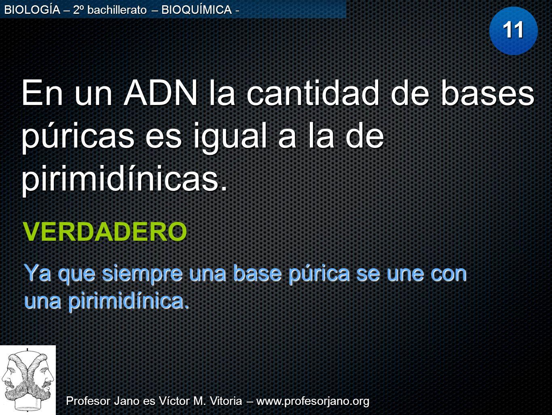 Profesor Jano es Víctor M. Vitoria – www.profesorjano.org BIOLOGÍA – 2º bachillerato – BIOQUÍMICA - En un ADN la cantidad de bases púricas es igual a