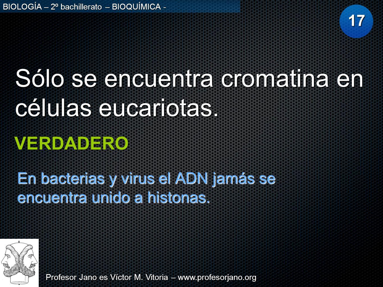 Profesor Jano es Víctor M. Vitoria – www.profesorjano.org BIOLOGÍA – 2º bachillerato – BIOQUÍMICA - Sólo se encuentra cromatina en células eucariotas.