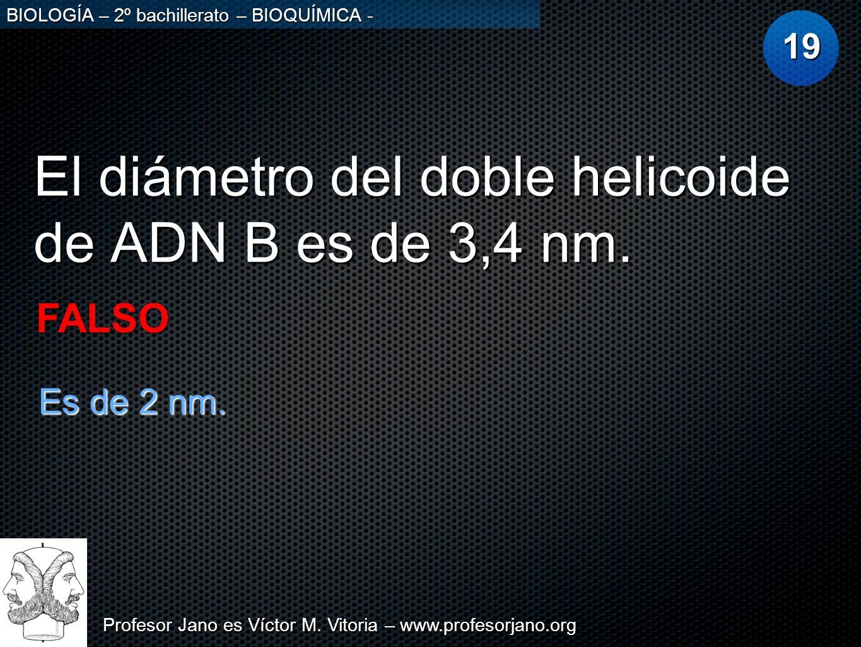 Profesor Jano es Víctor M. Vitoria – www.profesorjano.org BIOLOGÍA – 2º bachillerato – BIOQUÍMICA - El diámetro del doble helicoide de ADN B es de 3,4