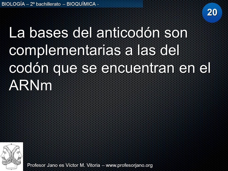 Profesor Jano es Víctor M. Vitoria – www.profesorjano.org BIOLOGÍA – 2º bachillerato – BIOQUÍMICA - La bases del anticodón son complementarias a las d