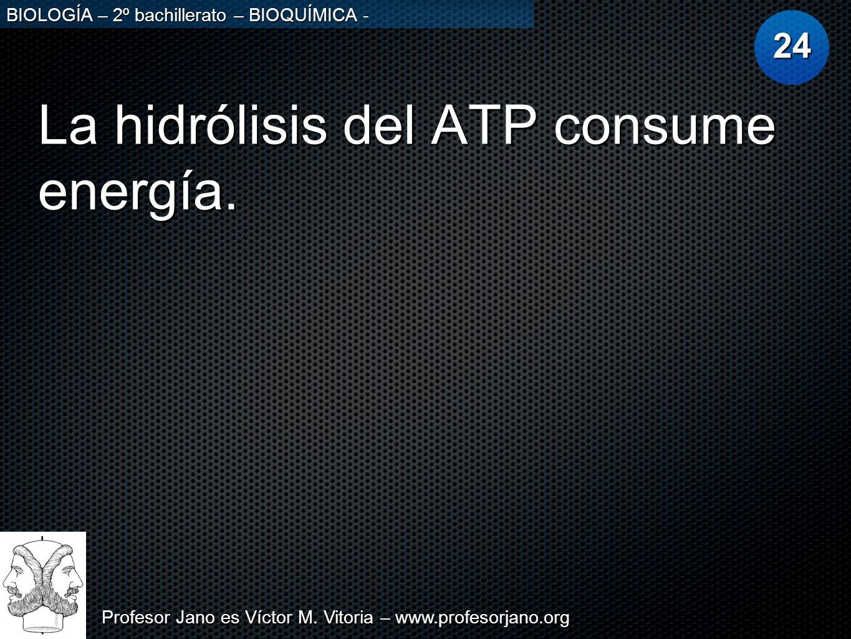 Profesor Jano es Víctor M. Vitoria – www.profesorjano.org BIOLOGÍA – 2º bachillerato – BIOQUÍMICA - La hidrólisis del ATP consume energía. 24