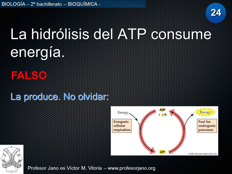 Profesor Jano es Víctor M. Vitoria – www.profesorjano.org BIOLOGÍA – 2º bachillerato – BIOQUÍMICA - La hidrólisis del ATP consume energía. 24 FALSO La