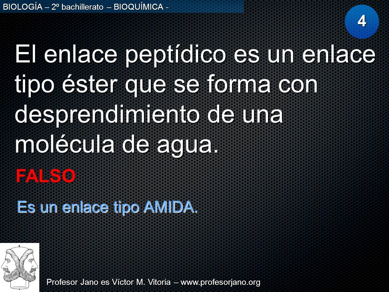 Profesor Jano es Víctor M. Vitoria – www.profesorjano.org BIOLOGÍA – 2º bachillerato – BIOQUÍMICA - El enlace peptídico es un enlace tipo éster que se