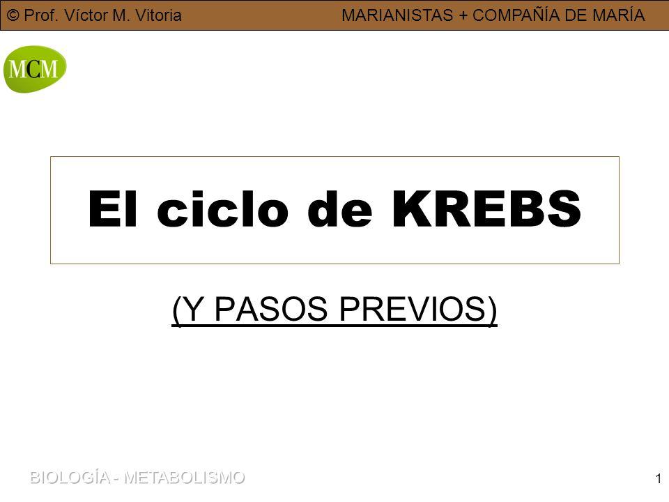 © Prof. Víctor M. VitoriaMARIANISTAS + COMPAÑÍA DE MARÍA 1 El ciclo de KREBS (Y PASOS PREVIOS)