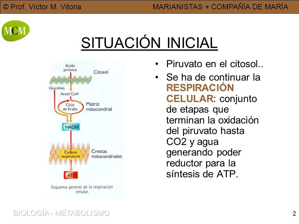 © Prof. Víctor M. VitoriaMARIANISTAS + COMPAÑÍA DE MARÍA 2 SITUACIÓN INICIAL Piruvato en el citosol.. Se ha de continuar la RESPIRACIÓN CELULAR: conju