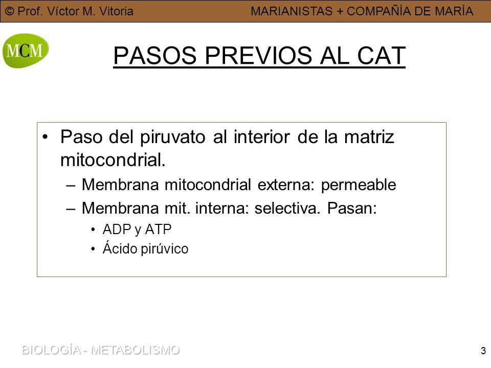 © Prof. Víctor M. VitoriaMARIANISTAS + COMPAÑÍA DE MARÍA 3 PASOS PREVIOS AL CAT Paso del piruvato al interior de la matriz mitocondrial. –Membrana mit