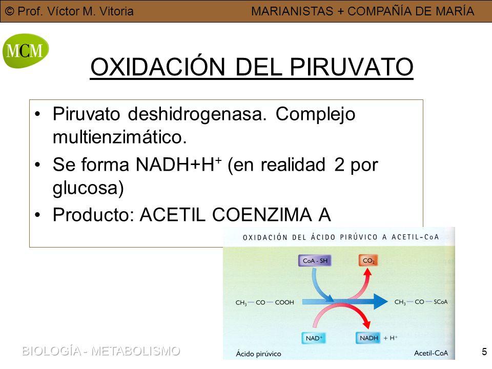 © Prof. Víctor M. VitoriaMARIANISTAS + COMPAÑÍA DE MARÍA 5 OXIDACIÓN DEL PIRUVATO Piruvato deshidrogenasa. Complejo multienzimático. Se forma NADH+H +
