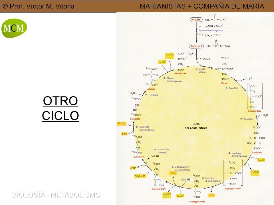 © Prof. Víctor M. VitoriaMARIANISTAS + COMPAÑÍA DE MARÍA 8 OTRO CICLO