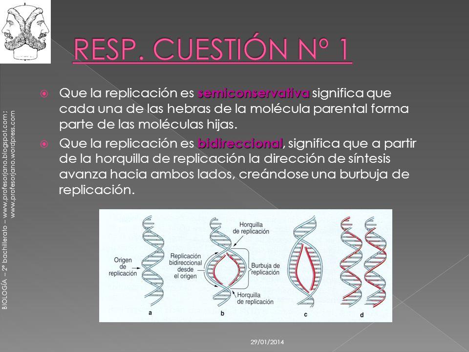 BIOLOGÍA – 2º bachillerato – www,profesorjano.blogspot.com ; www.profesorjano.wordpress.com 29/01/2014 semiconservativa Que la replicación es semicons