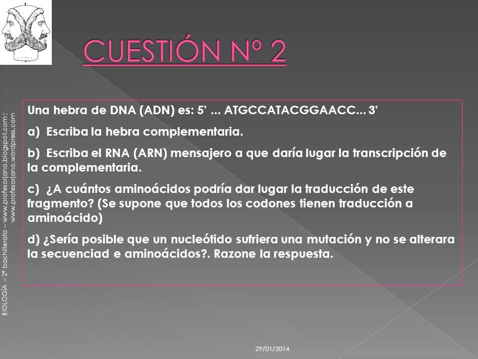 BIOLOGÍA – 2º bachillerato – www,profesorjano.blogspot.com ; www.profesorjano.wordpress.com 29/01/2014 Una hebra de DNA (ADN) es: 5... ATGCCATACGGAACC