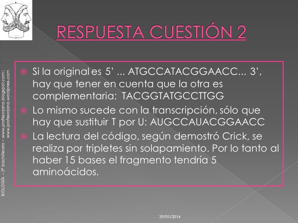 BIOLOGÍA – 2º bachillerato – www,profesorjano.blogspot.com ; www.profesorjano.wordpress.com 29/01/2014 Si la original es 5... ATGCCATACGGAACC... 3, ha