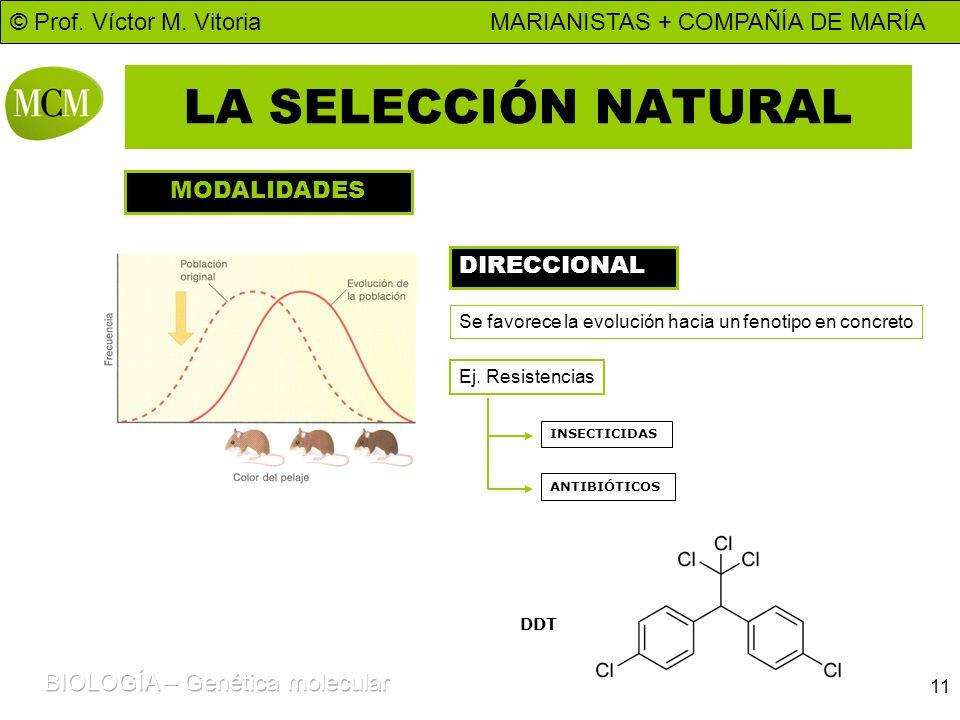 © Prof. Víctor M. Vitoria MARIANISTAS + COMPAÑÍA DE MARÍA 11 LA SELECCIÓN NATURAL MODALIDADES DIRECCIONAL Se favorece la evolución hacia un fenotipo e