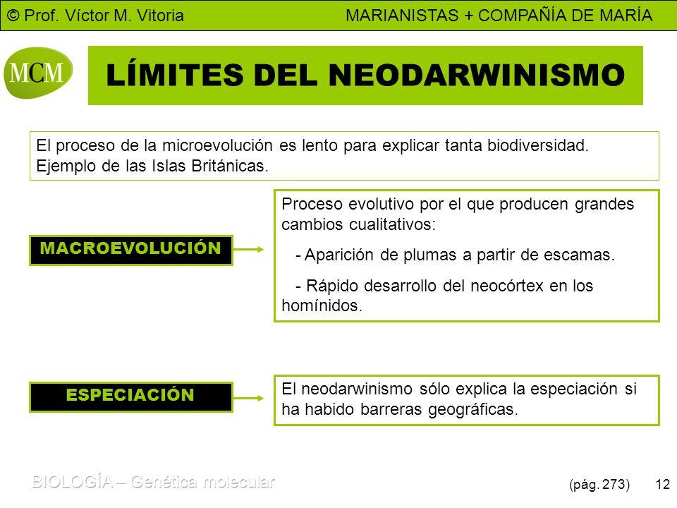 © Prof. Víctor M. Vitoria MARIANISTAS + COMPAÑÍA DE MARÍA 12 LÍMITES DEL NEODARWINISMO El proceso de la microevolución es lento para explicar tanta bi