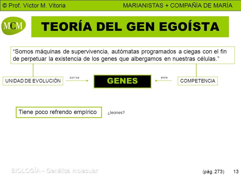 © Prof. Víctor M. Vitoria MARIANISTAS + COMPAÑÍA DE MARÍA 13 TEORÍA DEL GEN EGOÍSTA Somos máquinas de supervivencia, autómatas programados a ciegas co