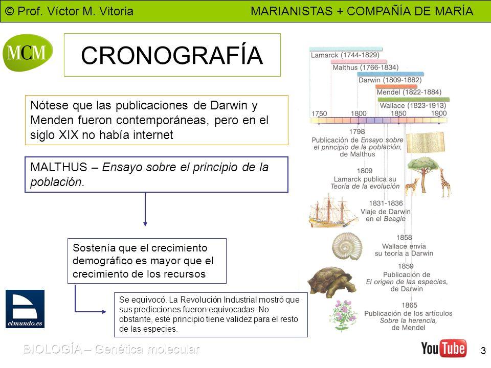 © Prof. Víctor M. Vitoria MARIANISTAS + COMPAÑÍA DE MARÍA 3 CRONOGRAFÍA Nótese que las publicaciones de Darwin y Menden fueron contemporáneas, pero en