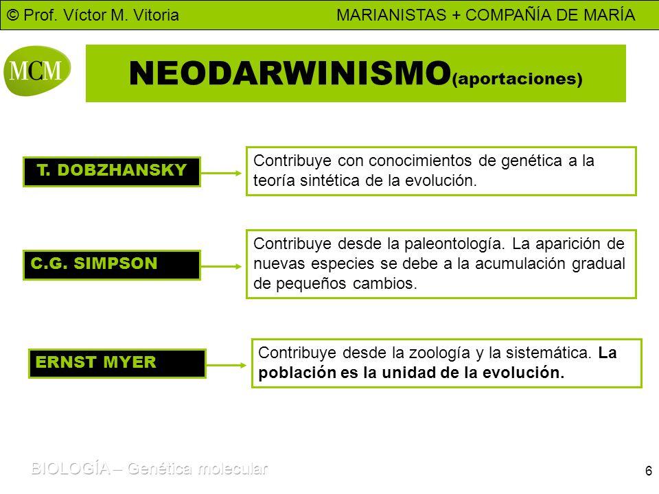 © Prof. Víctor M. Vitoria MARIANISTAS + COMPAÑÍA DE MARÍA 6 NEODARWINISMO (aportaciones) T. DOBZHANSKY Contribuye con conocimientos de genética a la t