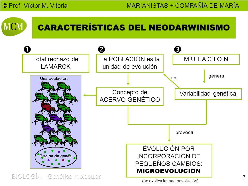 © Prof. Víctor M. Vitoria MARIANISTAS + COMPAÑÍA DE MARÍA 7 CARACTERÍSTICAS DEL NEODARWINISMO Total rechazo de LAMARCK M U T A C I Ó NLa POBLACIÓN es
