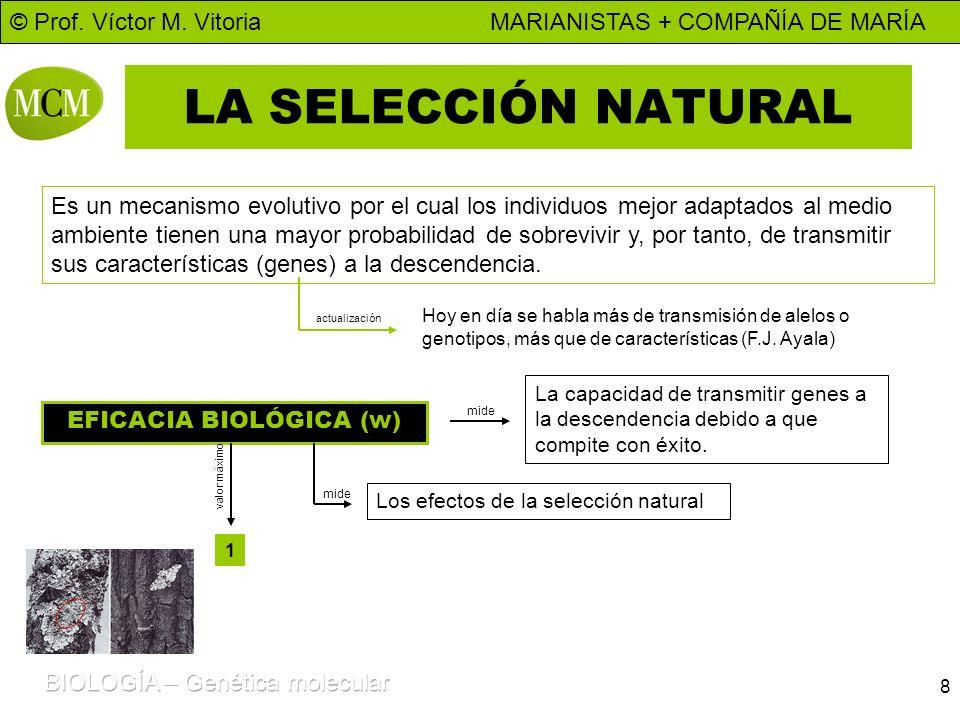 © Prof. Víctor M. Vitoria MARIANISTAS + COMPAÑÍA DE MARÍA 8 LA SELECCIÓN NATURAL Es un mecanismo evolutivo por el cual los individuos mejor adaptados