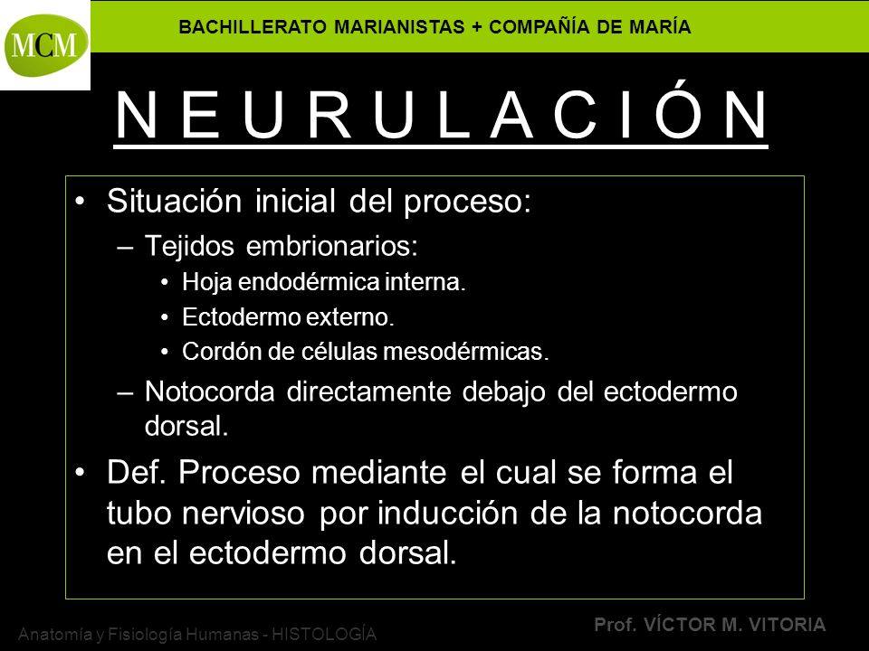 BACHILLERATO MARIANISTAS + COMPAÑÍA DE MARÍA Prof. VÍCTOR M. VITORIA Anatomía y Fisiología Humanas - HISTOLOGÍA N E U R U L A C I Ó N Situación inicia