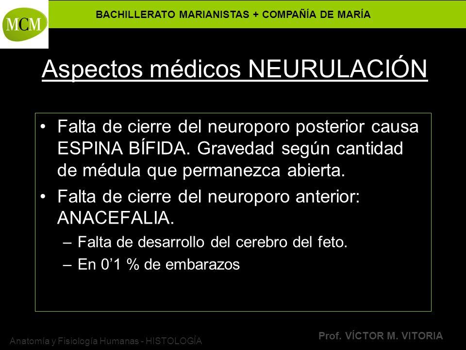 BACHILLERATO MARIANISTAS + COMPAÑÍA DE MARÍA Prof. VÍCTOR M. VITORIA Anatomía y Fisiología Humanas - HISTOLOGÍA Aspectos médicos NEURULACIÓN Falta de