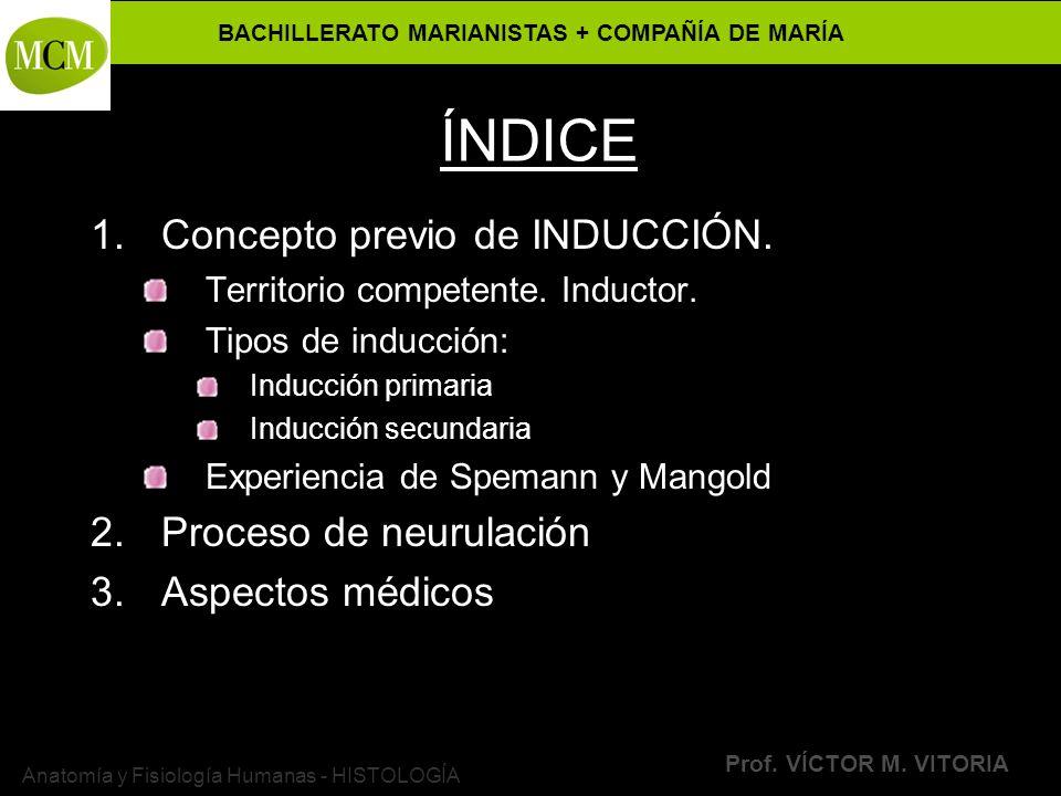 BACHILLERATO MARIANISTAS + COMPAÑÍA DE MARÍA Prof. VÍCTOR M. VITORIA Anatomía y Fisiología Humanas - HISTOLOGÍA ÍNDICE 1.Concepto previo de INDUCCIÓN.