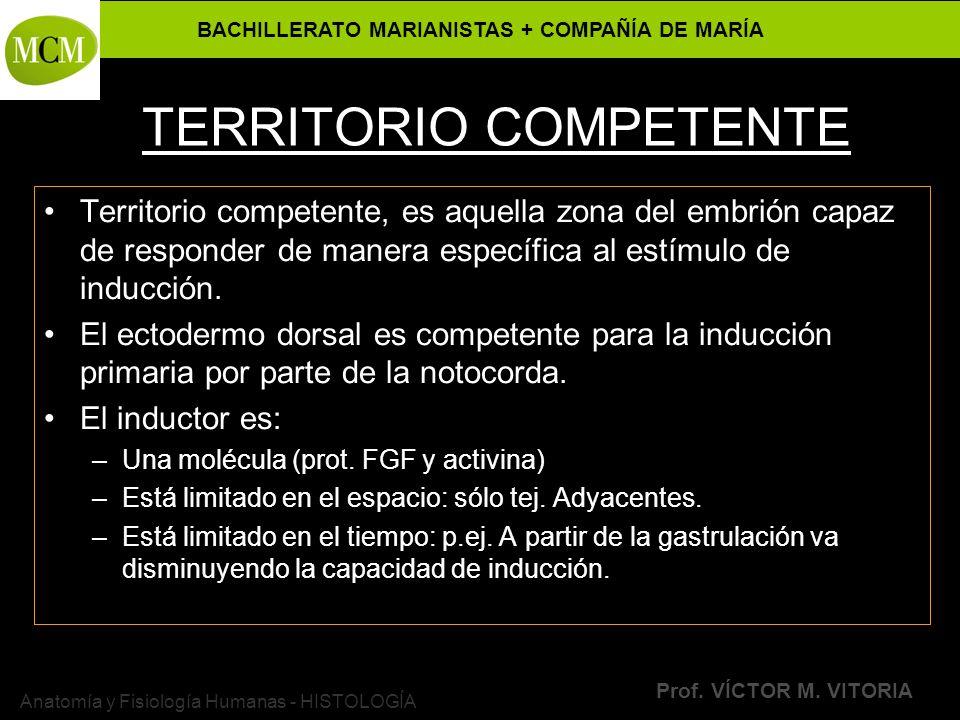 BACHILLERATO MARIANISTAS + COMPAÑÍA DE MARÍA Prof. VÍCTOR M. VITORIA Anatomía y Fisiología Humanas - HISTOLOGÍA TERRITORIO COMPETENTE Territorio compe