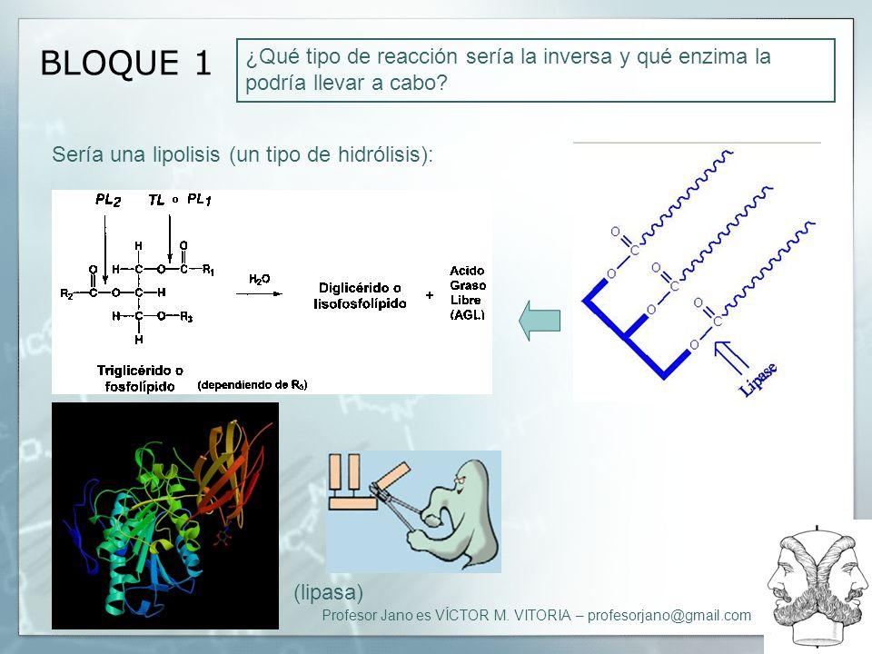 Profesor Jano es VÍCTOR M. VITORIA – profesorjano@gmail.com BLOQUE 1 ¿Qué tipo de reacción sería la inversa y qué enzima la podría llevar a cabo? Serí