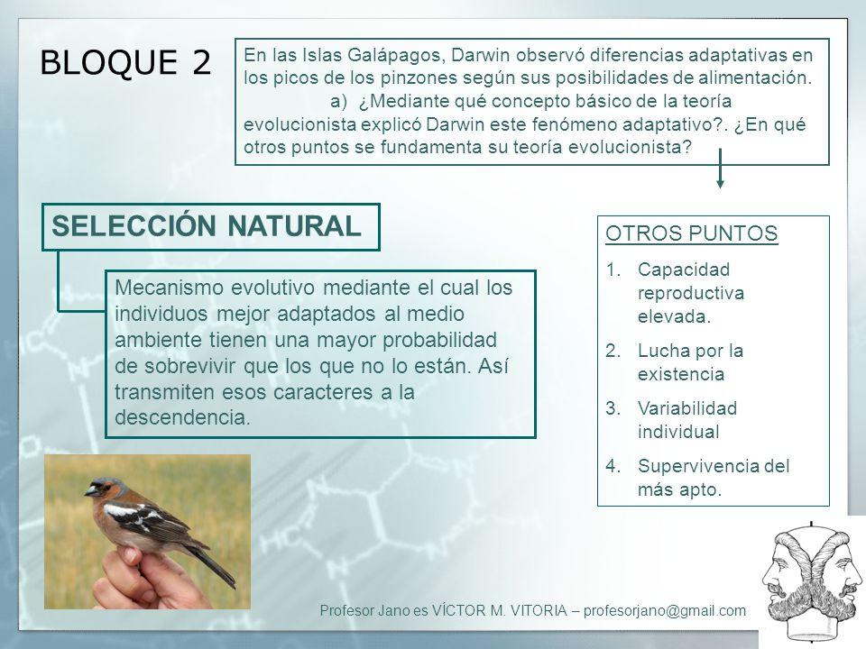 Profesor Jano es VÍCTOR M. VITORIA – profesorjano@gmail.com BLOQUE 2 En las Islas Galápagos, Darwin observó diferencias adaptativas en los picos de lo