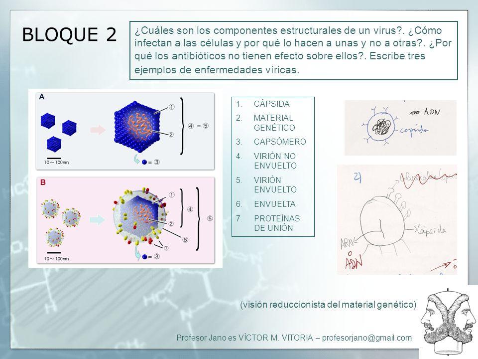 Profesor Jano es VÍCTOR M. VITORIA – profesorjano@gmail.com BLOQUE 2 ¿Cuáles son los componentes estructurales de un virus?. ¿Cómo infectan a las célu
