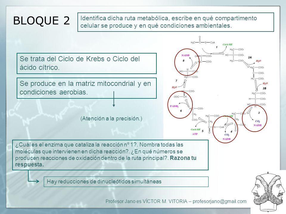 Profesor Jano es VÍCTOR M. VITORIA – profesorjano@gmail.com BLOQUE 2 Identifica dicha ruta metabólica, escribe en qué compartimento celular se produce